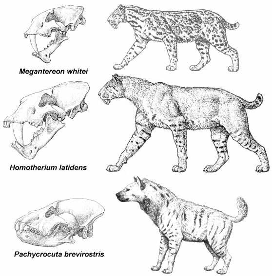 Dibujo De Animales Carroñeros Imagui