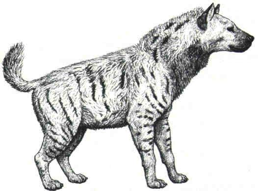 Lobos Perros Siluetas Mamíferos: Pachycrocuta : Ivanov_petrov